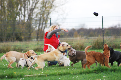 Hundeauslaufgelände