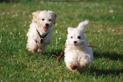 Amicanis_kleine_Hunde_1